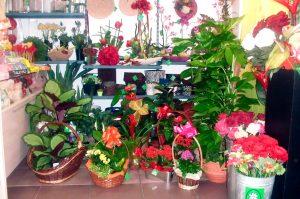 floristeria-sevilla-antonia-bueno